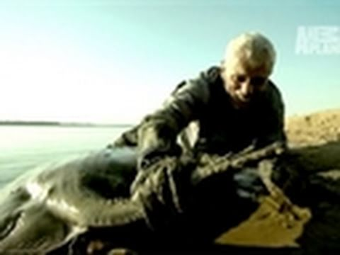River Monsters- How to Catch a Short-Tailed Stingray