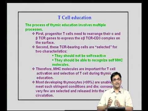 Mod-13 Lec-27 T cell Activation / Differentiation