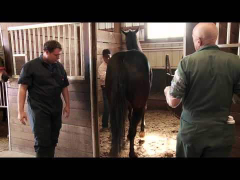 The Incredible Dr. Pol - Checking the Horses