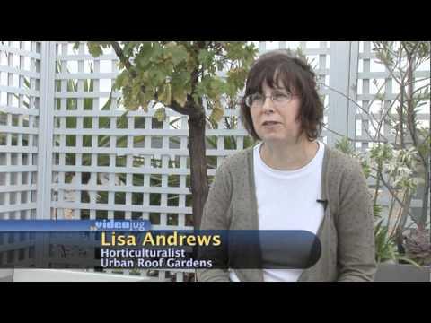 How do roof terraces help wildlife