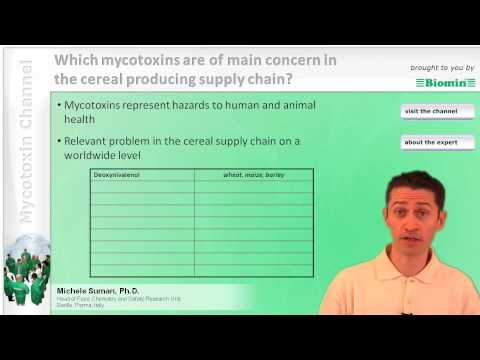 Which mycotoxins are of main concern in the cereal producing supply chain?