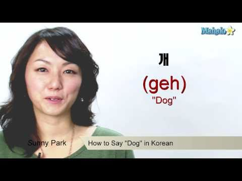 "How to Say ""Dog"" in Korean"