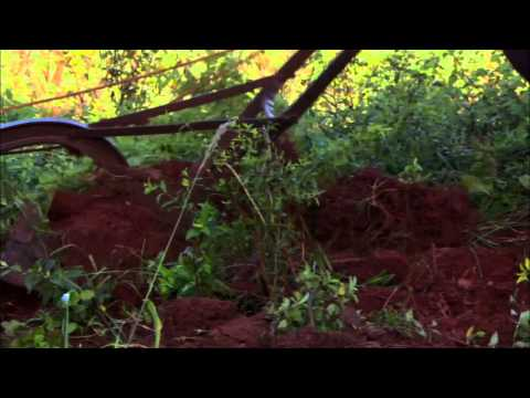 NATURE   Cuba: The Accidental Eden   A Natural Laboratory   PBS