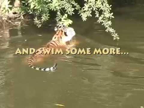!!!! Auroara of Big Cat Rescue 02/96 - 10/21/08.