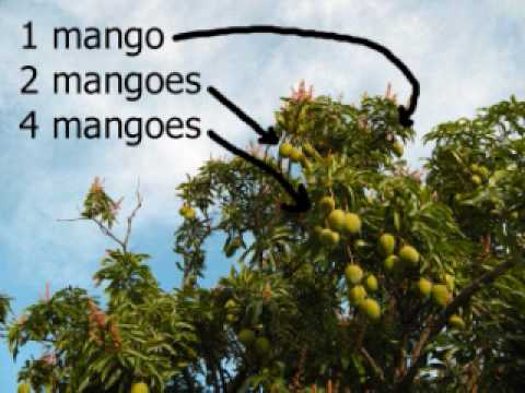 Learn English Study Lesson 93 - Mango (Free ESL)