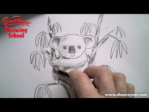 how to draw a Koala - (They are not bears!)