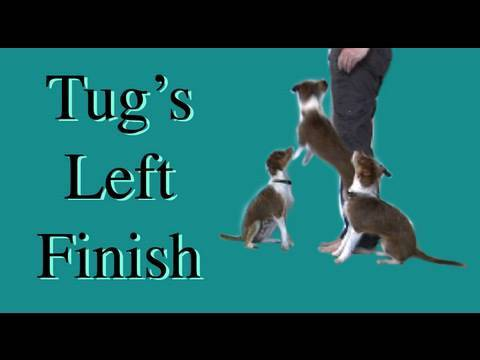 Tug's flying finish!- clicker dog training