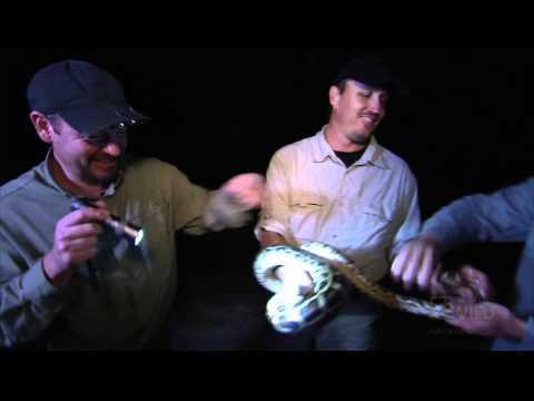 Python Hunters - Stinky Snake Hunt
