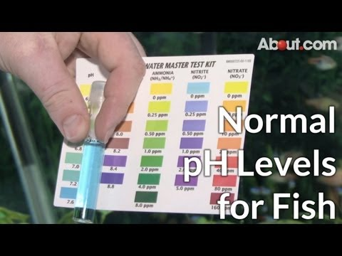 What Are Normal pH Levels for Fish?