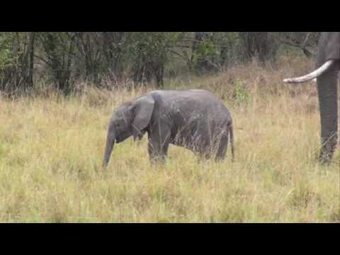 Elephant Family - Safari Sunday