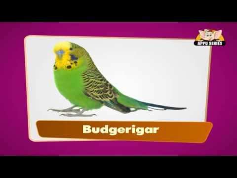 Flashcards for children - Birds