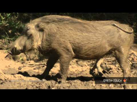Natural Mozart - Birds, warthogs and magnificent marine life