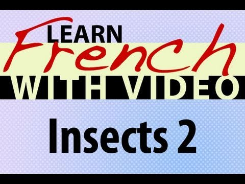 Learn French with Videos - Insects 2