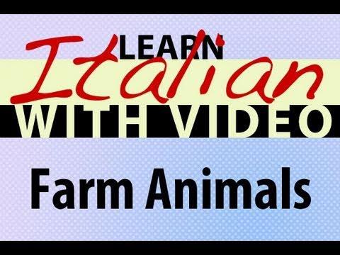 Learn Italian with Video - Farm Animals