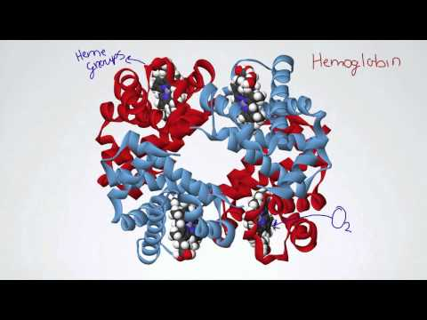 060 Hemoglobin and the Oxygen-Dissociation Curve