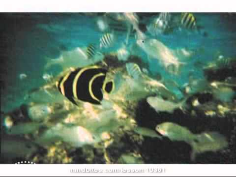 Tropical delights Prt. 3 of 9 - Beach/underwater