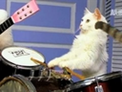 Must Love Cats- World's Only Feline Band!