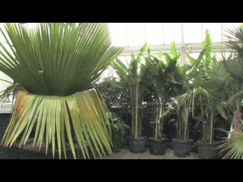The Orchid Show: Cuba in Flower in the Making - February 7