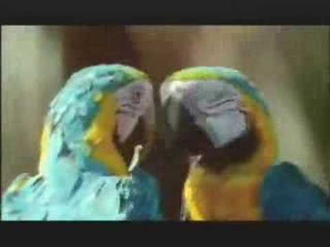 "NATURE ""The Real Macaw"" 