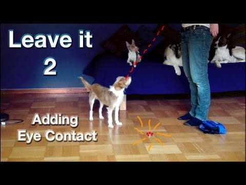 Leave it 2- the most important things to train- clicker dog training