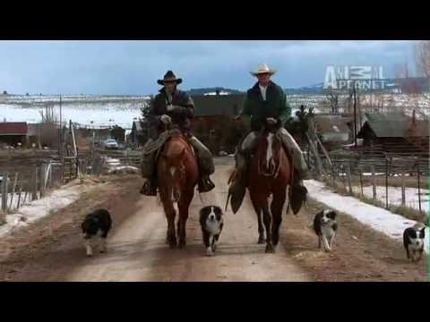 Last American Cowboy: The Cowboy Way