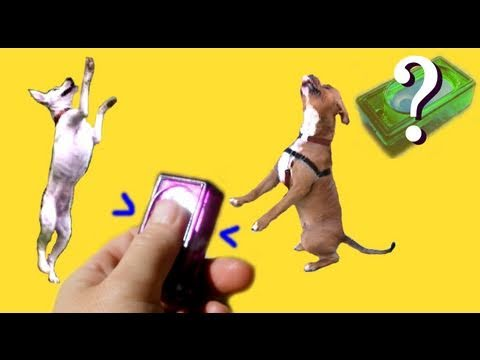 What is clicker training?- dog training