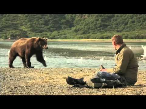 NATURE | Bears of the Last Frontier | Preview | PBS