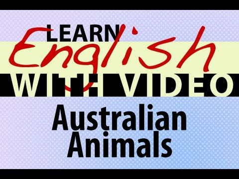 Learn English with Video - Australian Animals