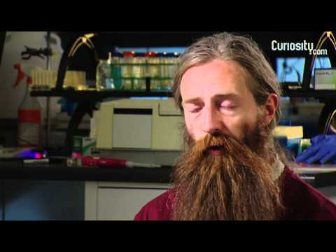 Aubrey de Grey: Future Longevity