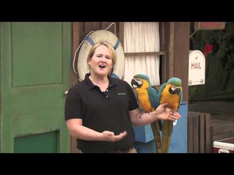 San Diego Zoo Kids - Macaws