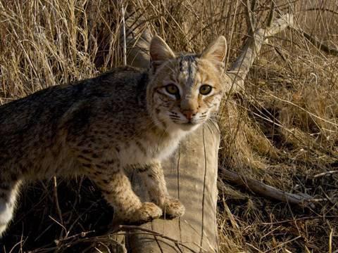 Wildlife Photography: To Catch a Predator (On Film)