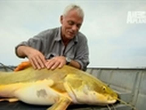 River Monsters- Massive Red-Tailed Catfish