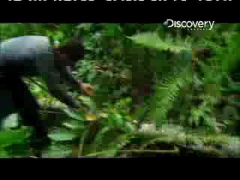 Man vs. Wild - Ecuador Rapid Water