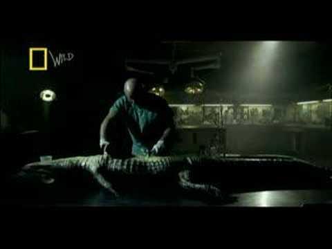 Zombie Alligator