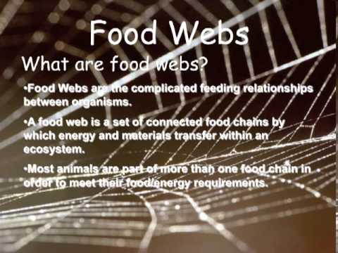 Food Chains, Food Webs and Energy Pyramids by Peter