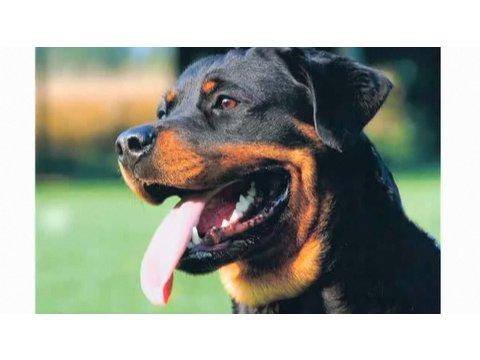 Understanding Dog Breeds: Rottweiler