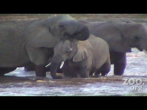 African Elephant Man Interview