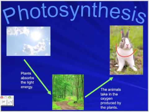 Photosynthesis and Cellular Respiration by Phillipe and Angela