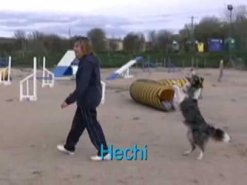 Dog Training Super Stars in Spain