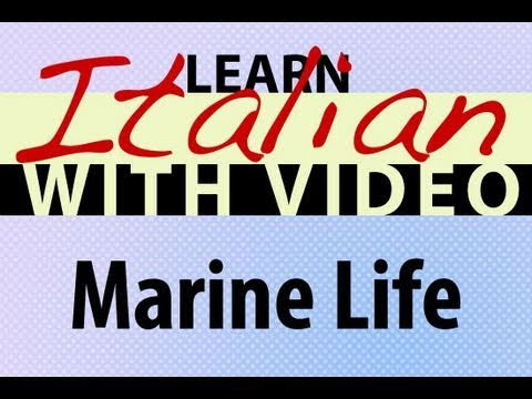 Learn Italian with Video - Marine Life