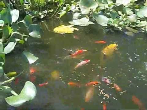 how to prepare a pond for Cold Weather Fall