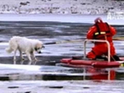 Untamed & Uncut- Dog Rescue Caught on Tape