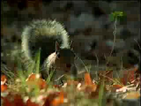 Fooled by Nature - Squirrel Navigators