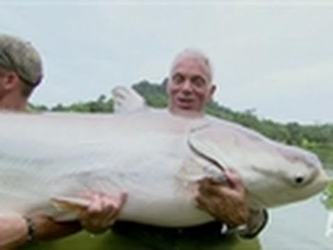 Mekong Giant Catfish | River Monsters