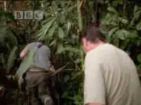 Michael Palin travels through the rainforest jungle - BBC