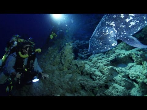 Finding the Coelacanth
