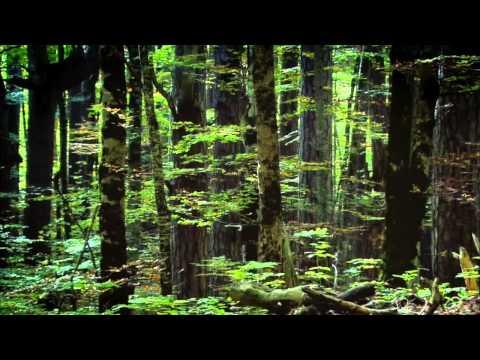 NATURE   Wild Balkans   Preview   PBS