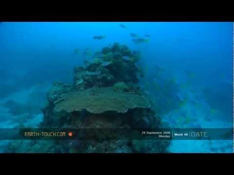 Strange Sea Slug Hides Among The Corals