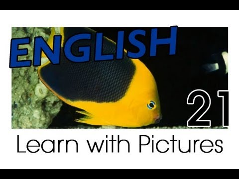 Learn English - English Marine Animals Vocabulary