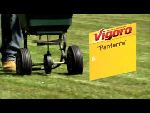 Vigoro Contractor All-Purpose Grass Seed Mix